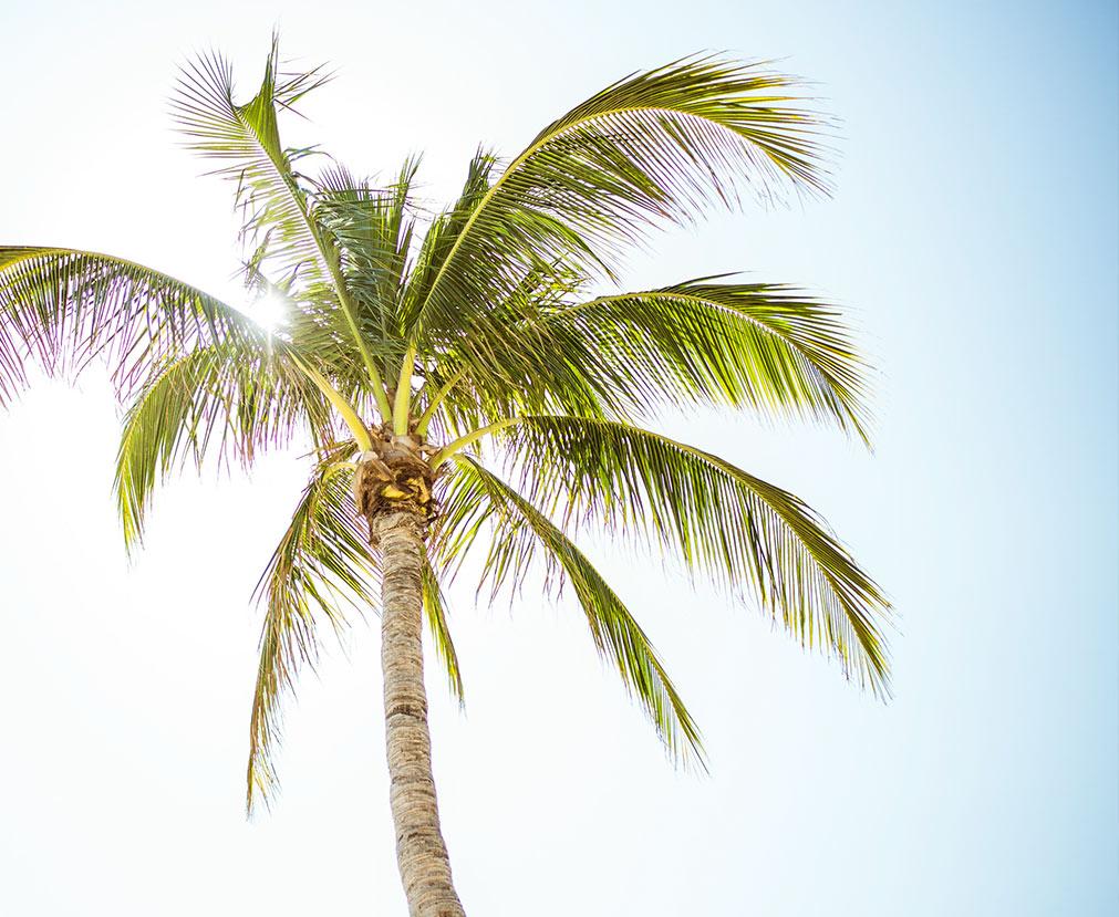 Palm_Miami